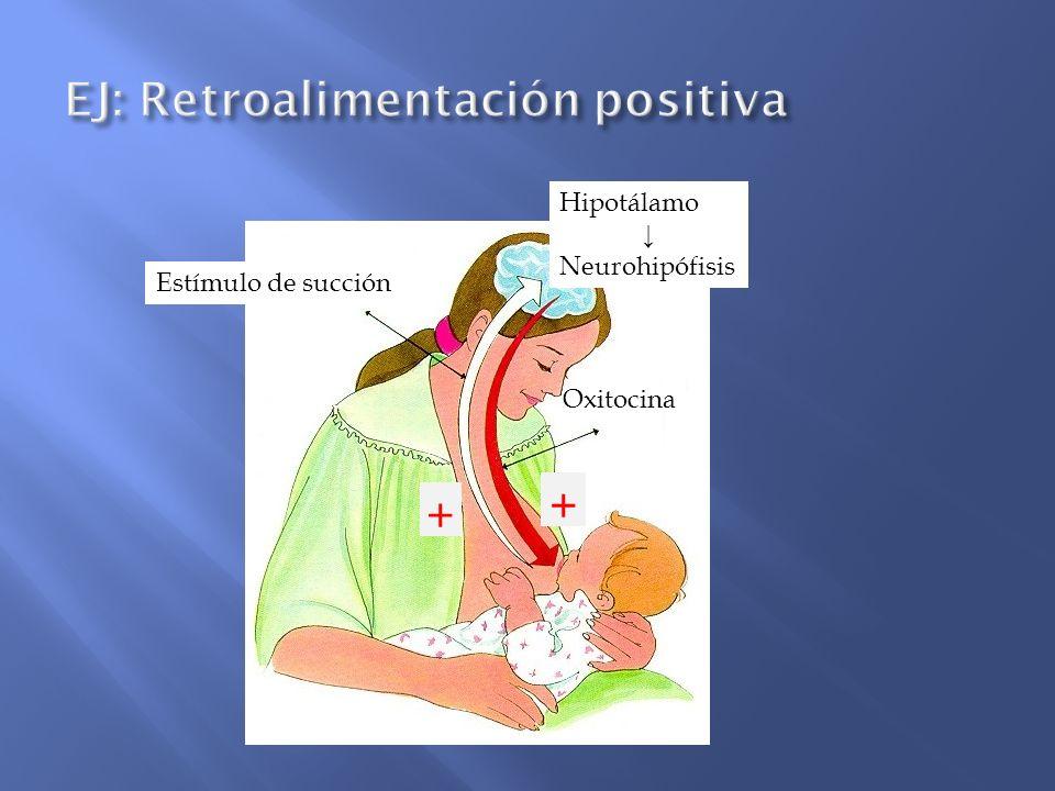 EJ: Retroalimentación positiva
