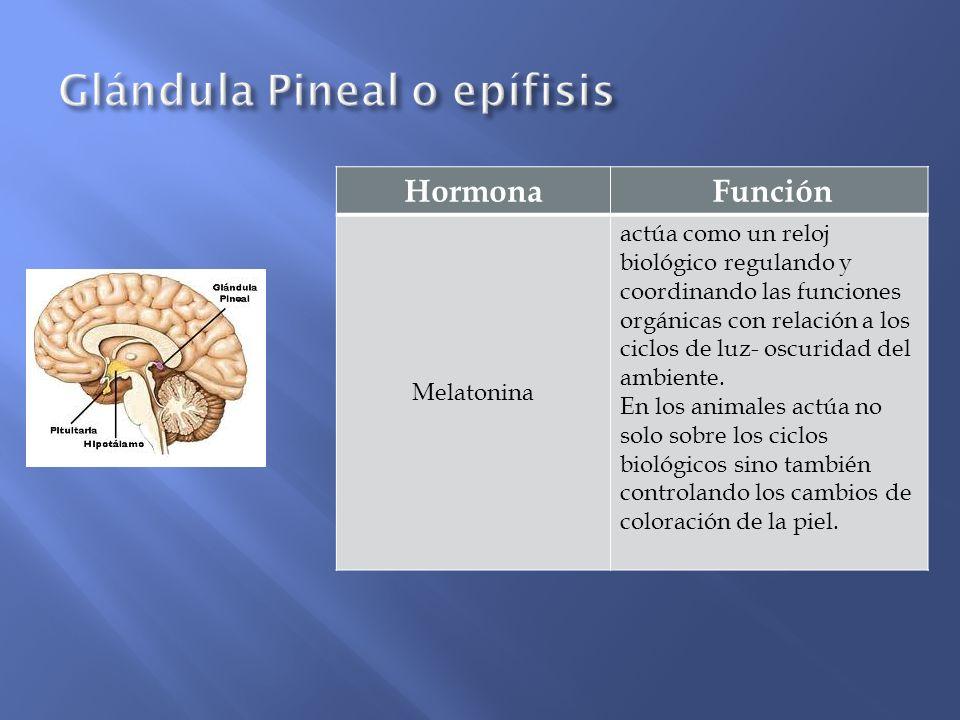 Glándula Pineal o epífisis