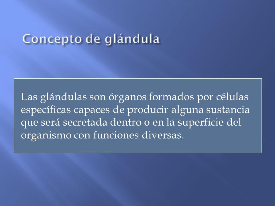 Concepto de glándula
