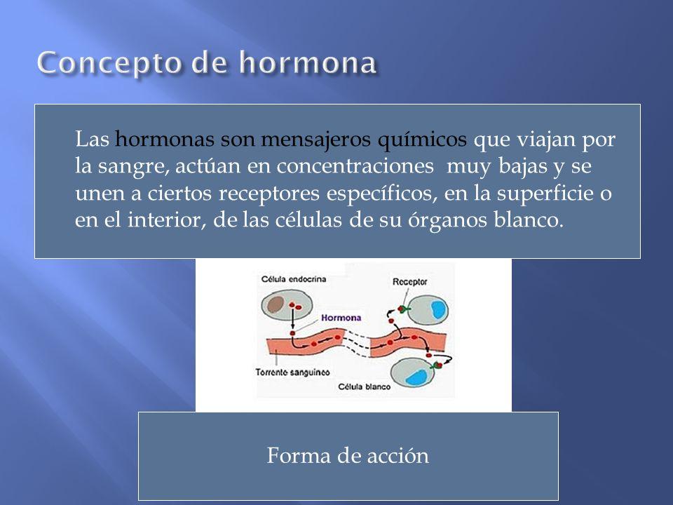 Concepto de hormona
