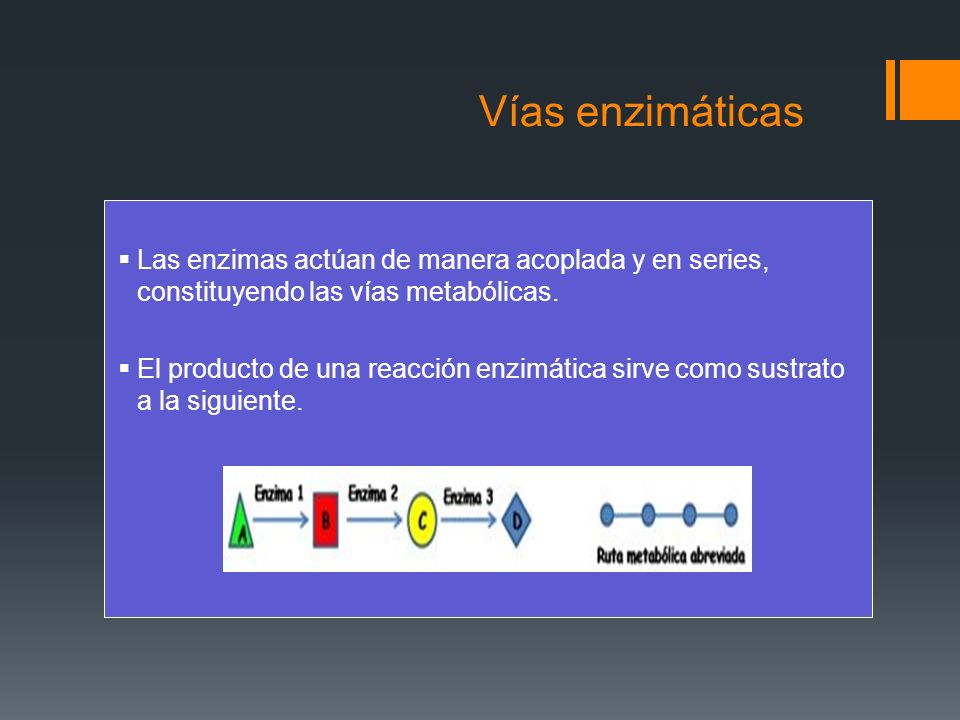 Vías enzimáticasLas enzimas actúan de manera acoplada y en series, constituyendo las vías metabólicas.