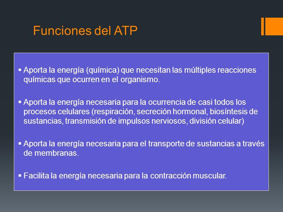 Funciones del ATPAporta la energía (química) que necesitan las múltiples reacciones químicas que ocurren en el organismo.
