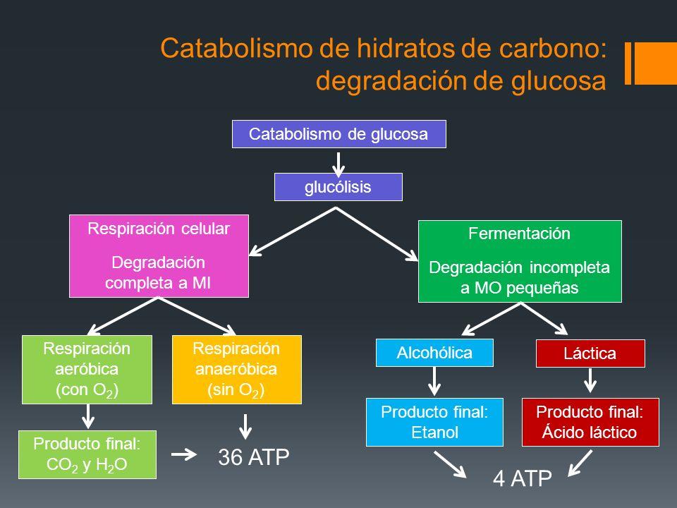 Catabolismo de hidratos de carbono: degradación de glucosa