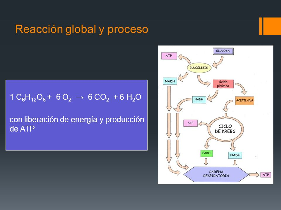 Reacción global y proceso