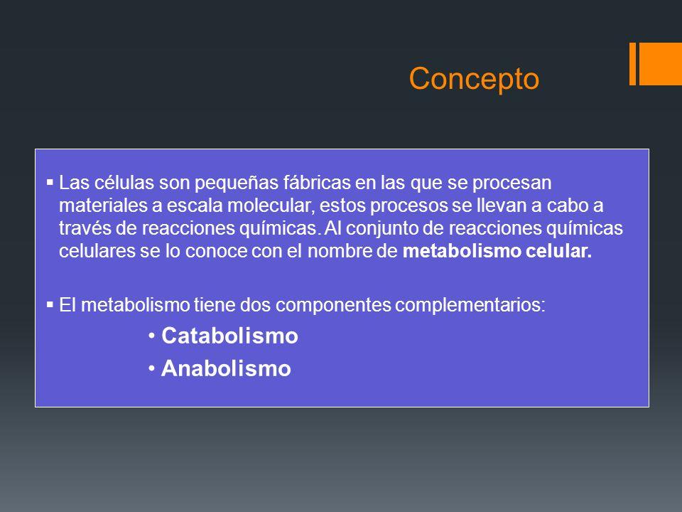 Concepto Catabolismo Anabolismo