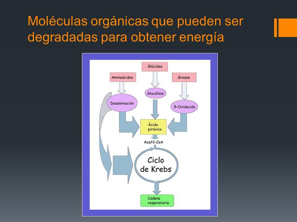 Moléculas orgánicas que pueden ser degradadas para obtener energía