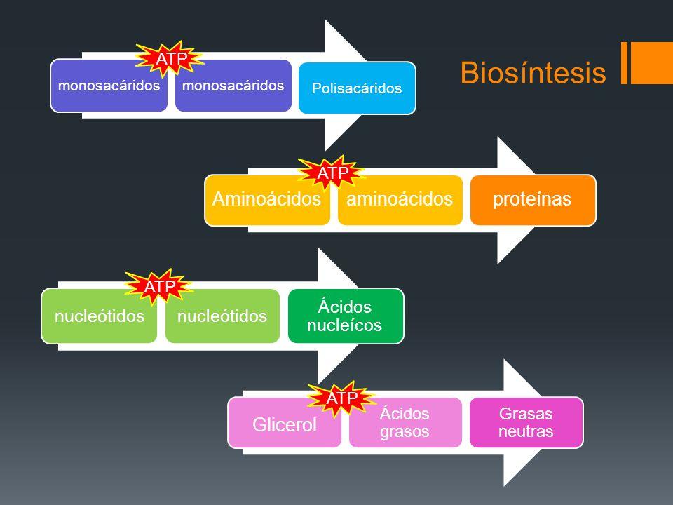 Biosíntesis Aminoácidos aminoácidos proteínas Glicerol