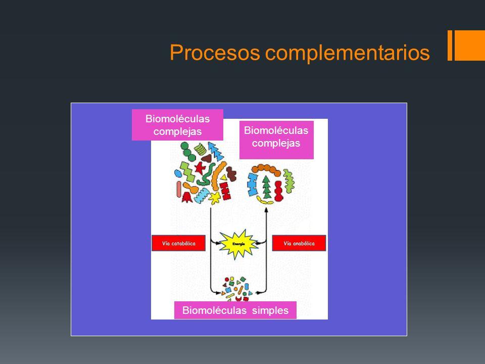 Procesos complementarios