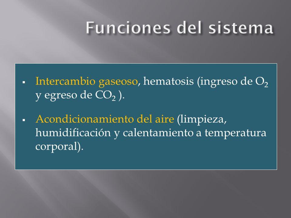 Funciones del sistema Intercambio gaseoso, hematosis (ingreso de O2 y egreso de CO2 ).