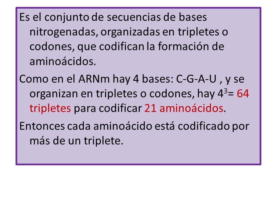 Es el conjunto de secuencias de bases nitrogenadas, organizadas en tripletes o codones, que codifican la formación de aminoácidos.