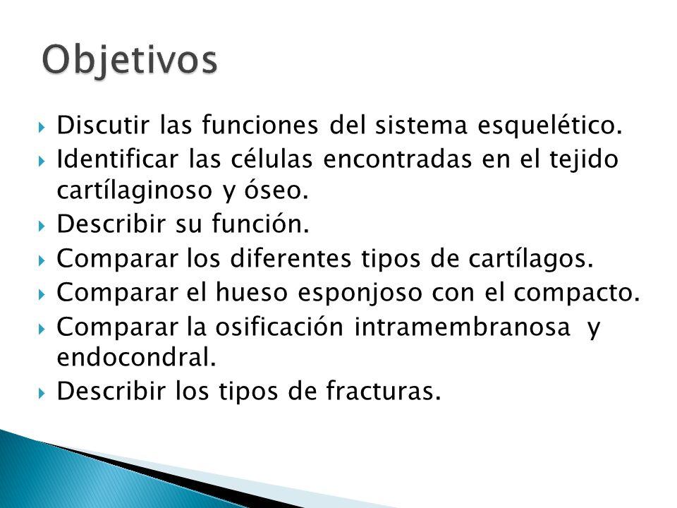 Objetivos Discutir las funciones del sistema esquelético.