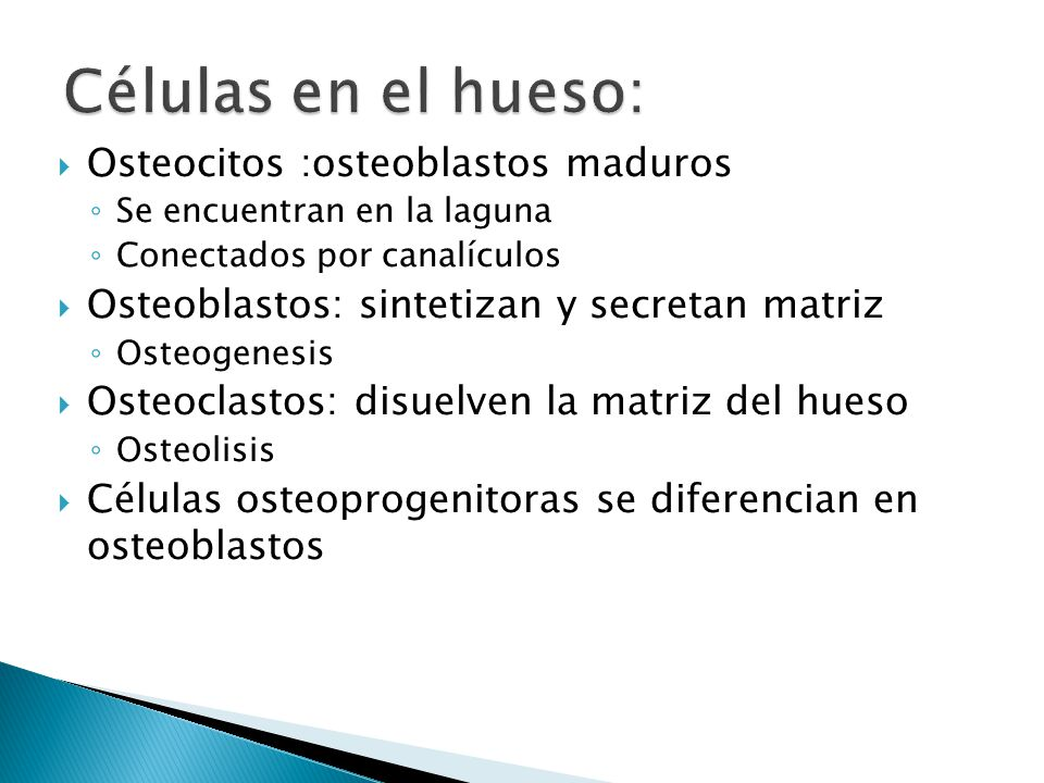 Células en el hueso: Osteocitos :osteoblastos maduros
