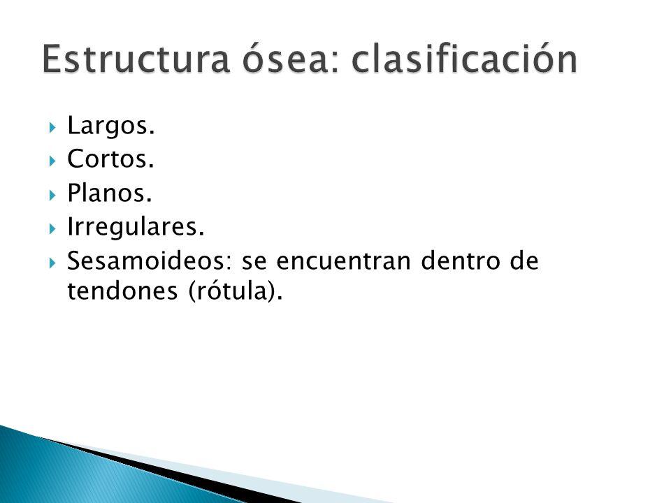 Estructura ósea: clasificación
