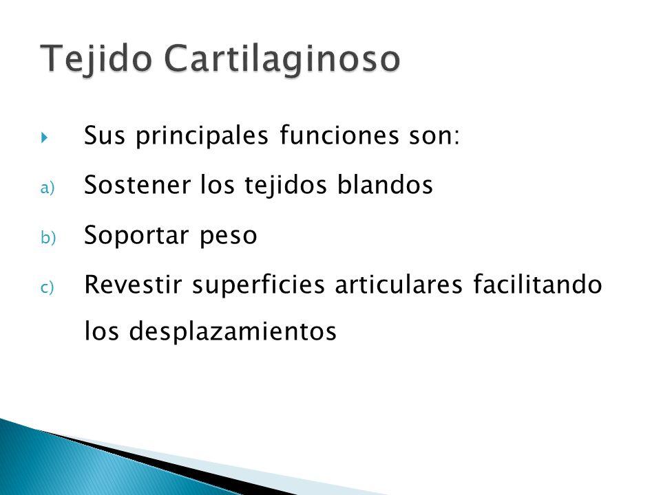 Tejido Cartilaginoso Sus principales funciones son: