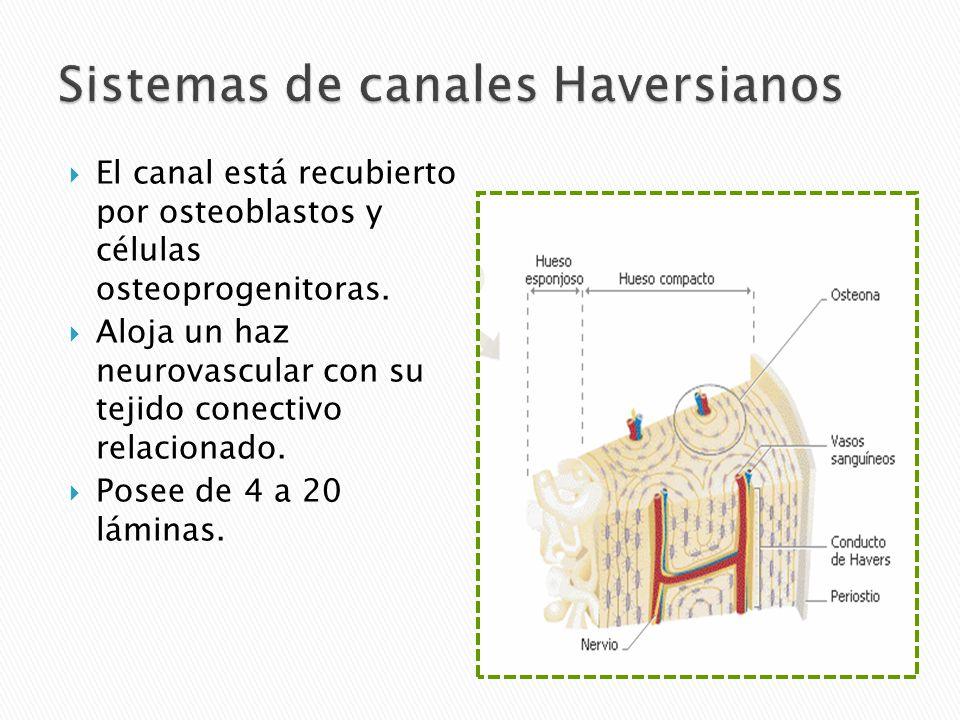 Sistemas de canales Haversianos