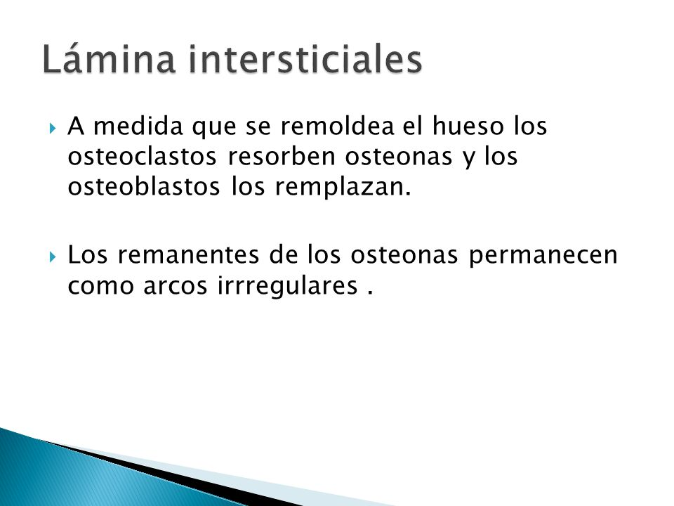 Lámina intersticiales