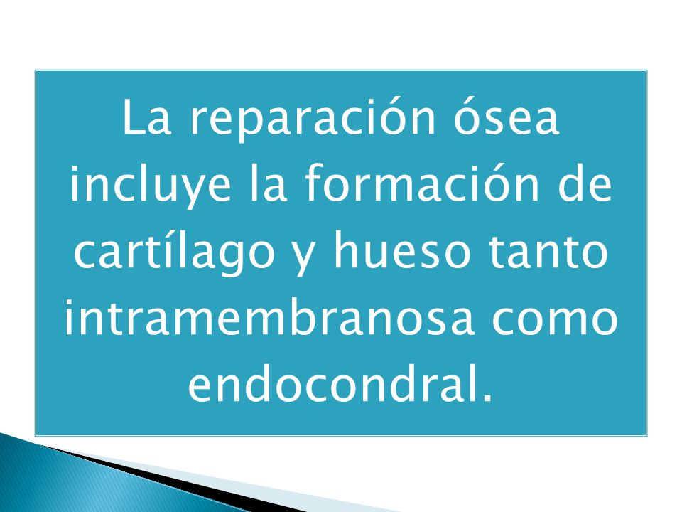 La reparación ósea incluye la formación de cartílago y hueso tanto intramembranosa como endocondral.