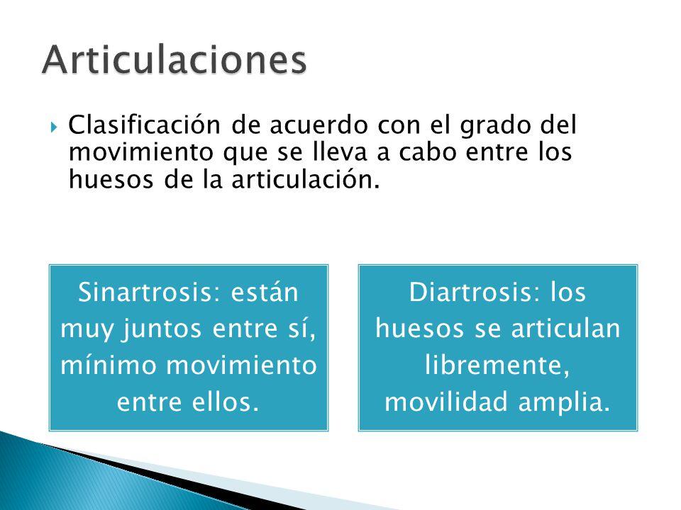 Articulaciones Clasificación de acuerdo con el grado del movimiento que se lleva a cabo entre los huesos de la articulación.
