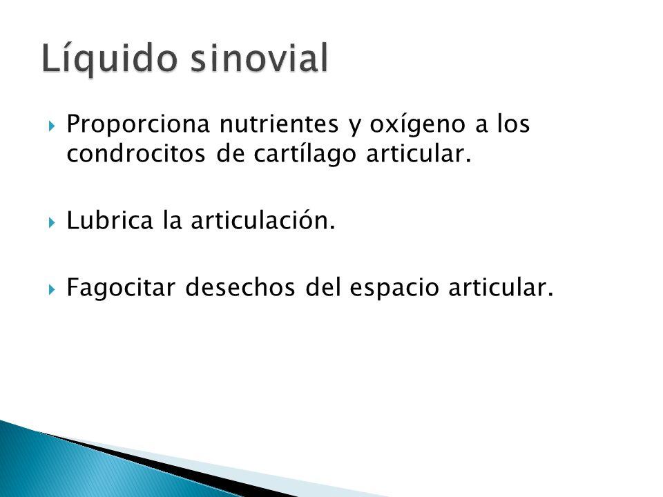 Líquido sinovial Proporciona nutrientes y oxígeno a los condrocitos de cartílago articular. Lubrica la articulación.