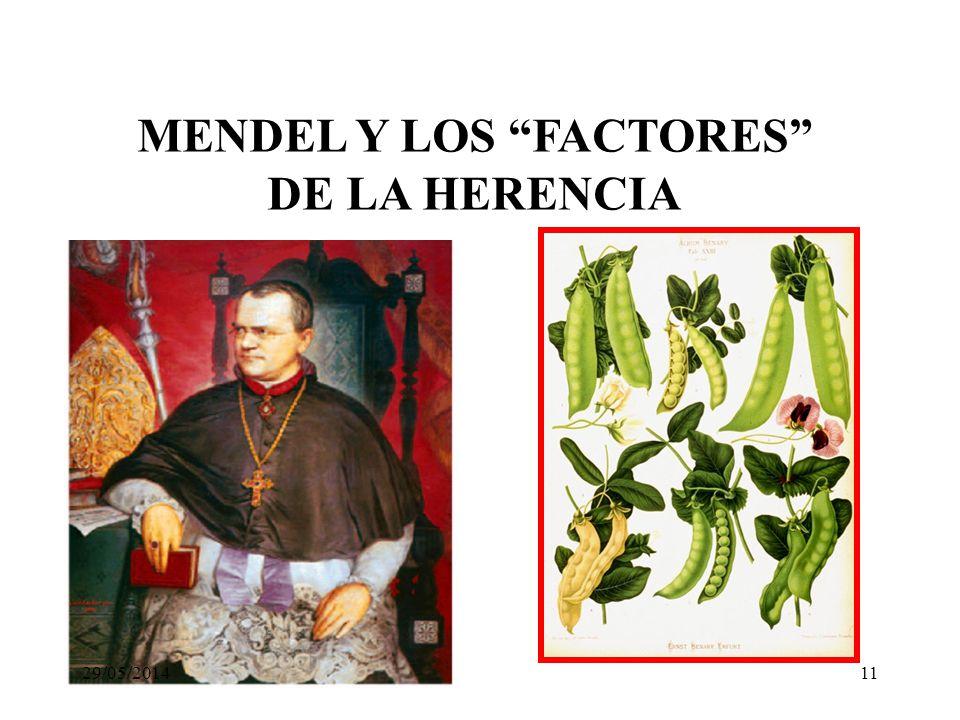 MENDEL Y LOS FACTORES DE LA HERENCIA