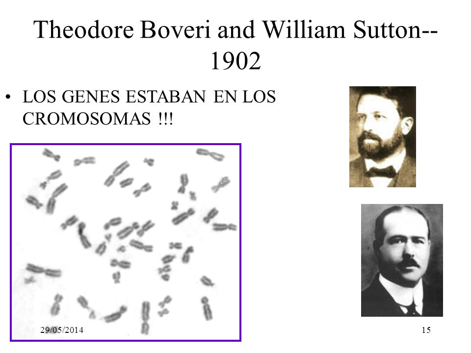 Theodore Boveri and William Sutton--1902