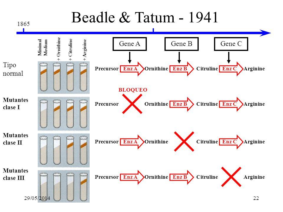 Beadle & Tatum - 1941 Gene A Gene B Gene C Tipo normal 1865