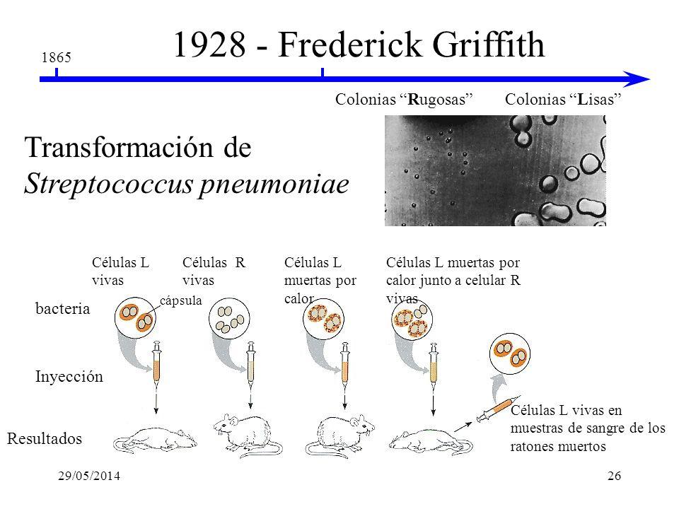 1928 - Frederick Griffith Transformación de Streptococcus pneumoniae