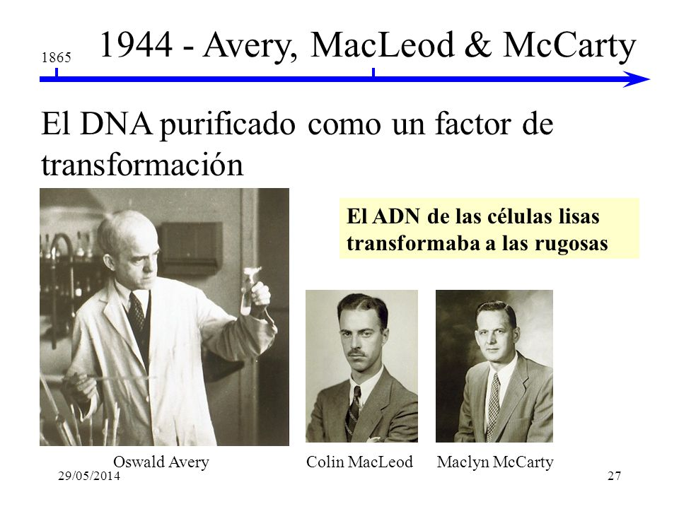 1944 - Avery, MacLeod & McCarty
