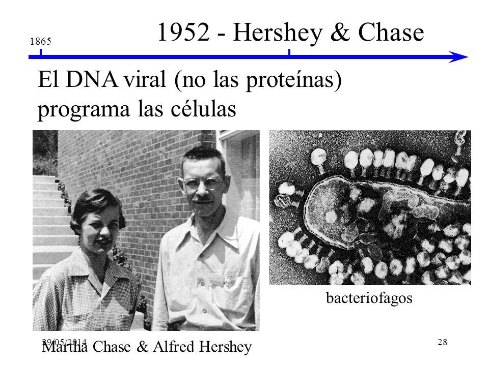 Martha Chase & Alfred Hershey