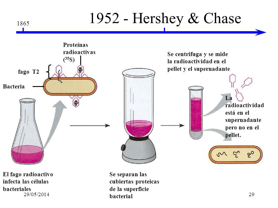 1952 - Hershey & Chase 1865 Proteínas radioactivas (35S)