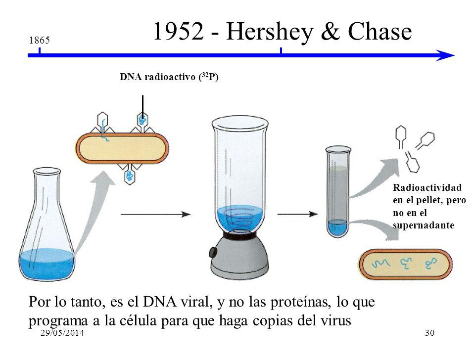 1952 - Hershey & Chase 1865. DNA radioactivo (32P) Radioactividad en el pellet, pero no en el supernadante.