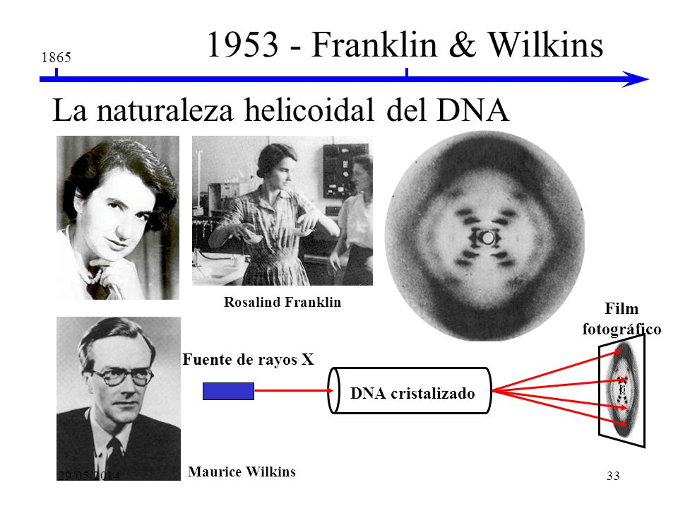 1953 - Franklin & Wilkins La naturaleza helicoidal del DNA
