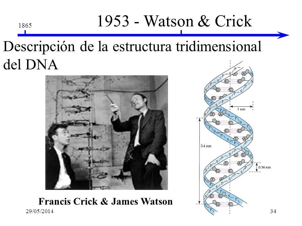 Francis Crick & James Watson