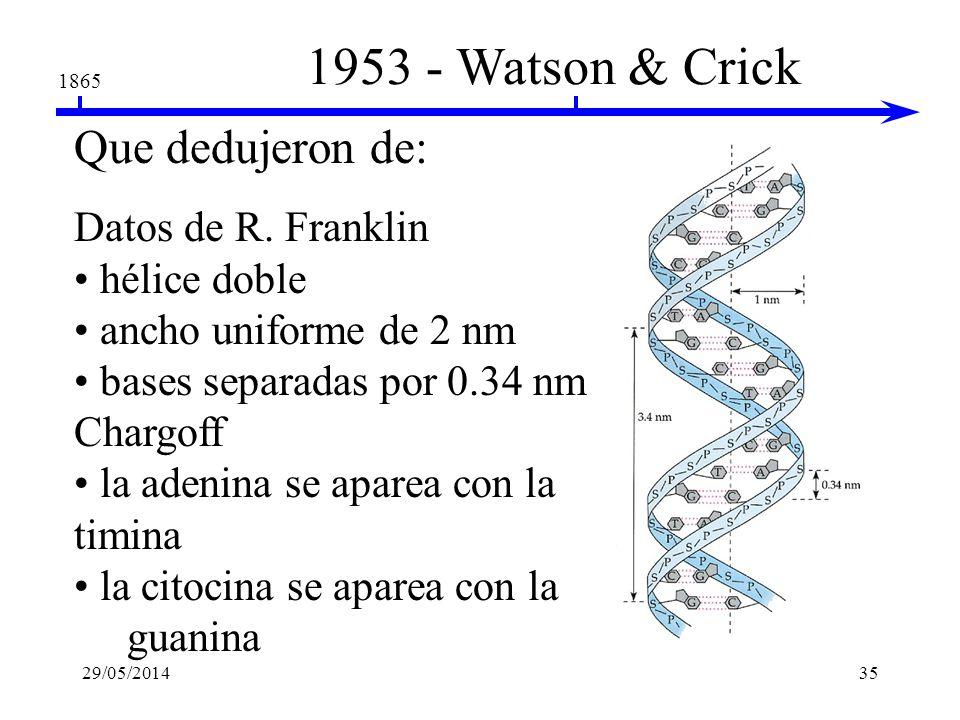 1953 - Watson & Crick Que dedujeron de: Datos de R. Franklin