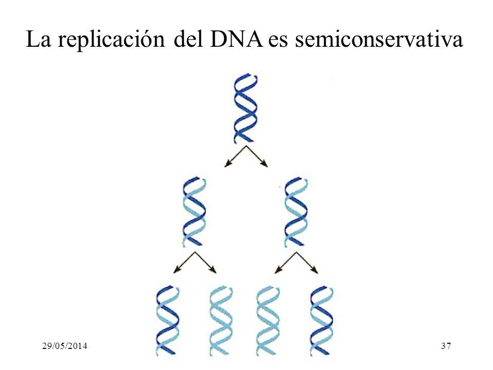 La replicación del DNA es semiconservativa
