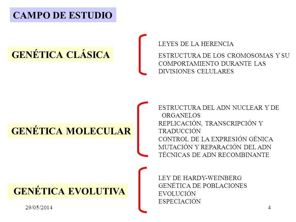 CAMPO DE ESTUDIO GENÉTICA CLÁSICA GENÉTICA MOLECULAR
