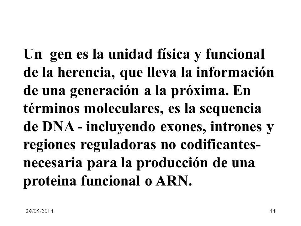 Un gen es la unidad física y funcional de la herencia, que lleva la información de una generación a la próxima. En términos moleculares, es la sequencia de DNA - incluyendo exones, intrones y regiones reguladoras no codificantes- necesaria para la producción de una proteina funcional o ARN.