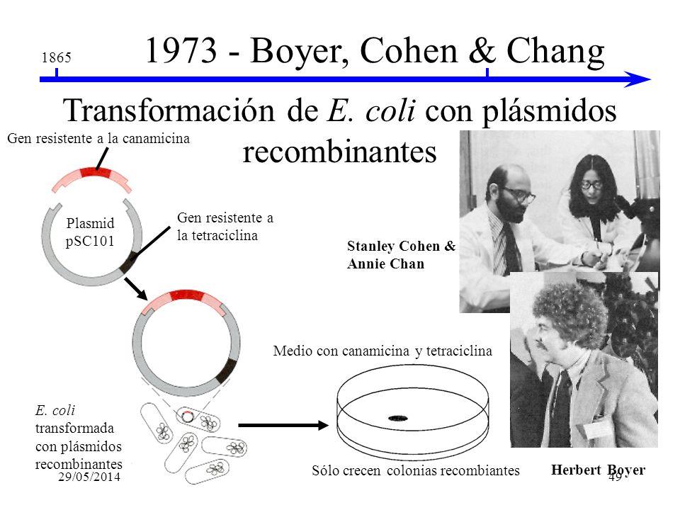 Transformación de E. coli con plásmidos recombinantes