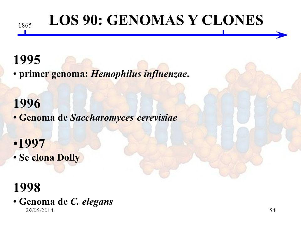 LOS 90: GENOMAS Y CLONES 1865. 1995. primer genoma: Hemophilus influenzae. 1996. Genoma de Saccharomyces cerevisiae.