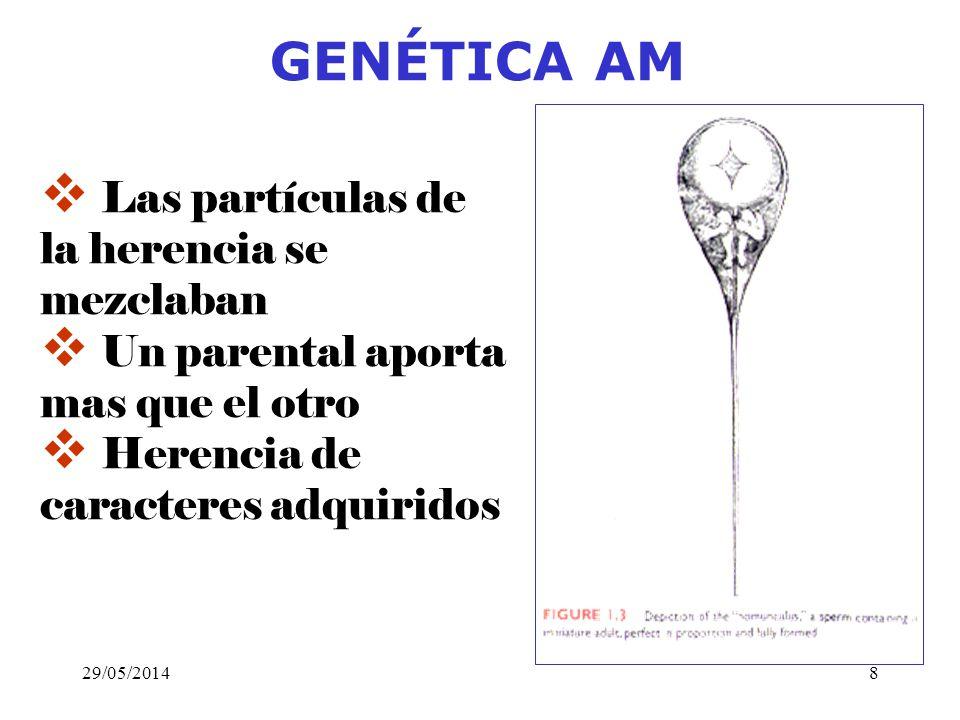 GENÉTICA AM Las partículas de la herencia se mezclaban