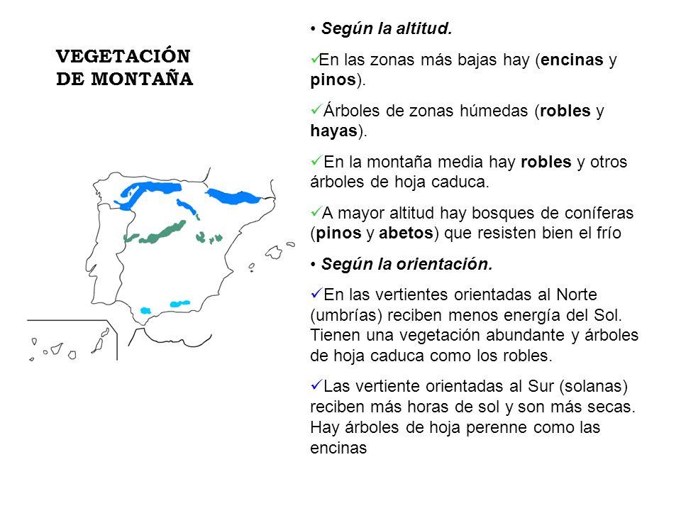 VEGETACIÓN DE MONTAÑA Según la altitud.
