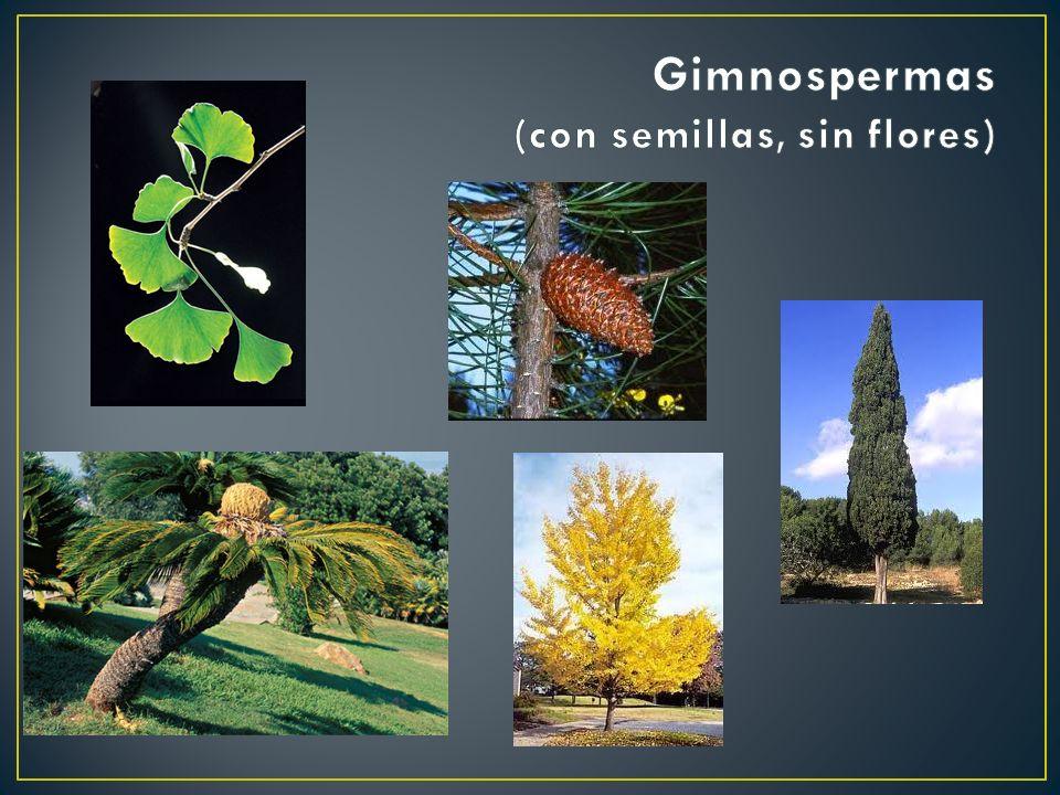 Gimnospermas (con semillas, sin flores)
