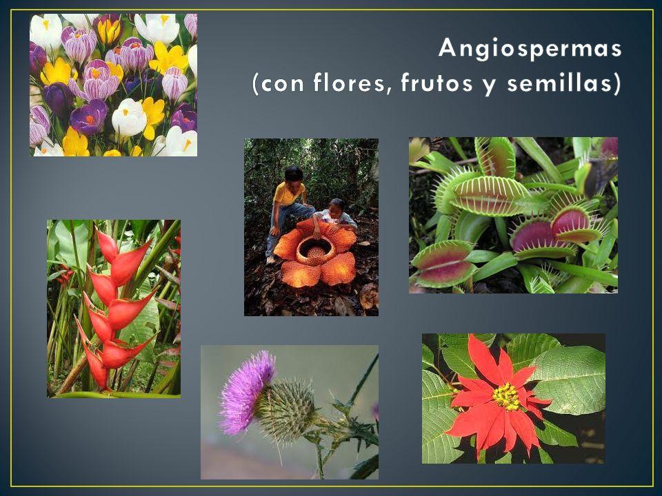 Angiospermas (con flores, frutos y semillas)