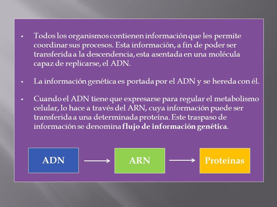 Todos los organismos contienen información que les permite coordinar sus procesos. Esta información, a fin de poder ser transferida a la descendencia, esta asentada en una molécula capaz de replicarse, el ADN.