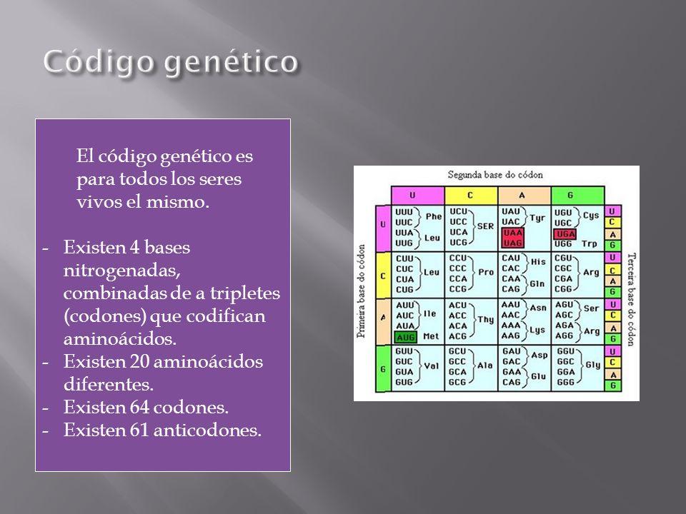 Código genético El código genético es para todos los seres vivos el mismo.
