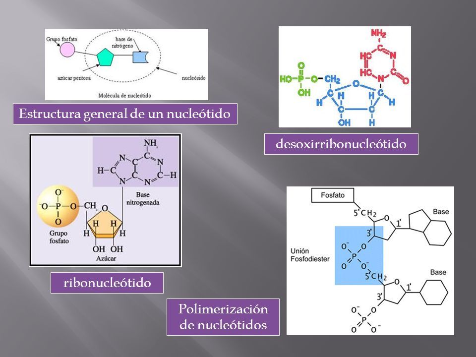 Estructura general de un nucleótido