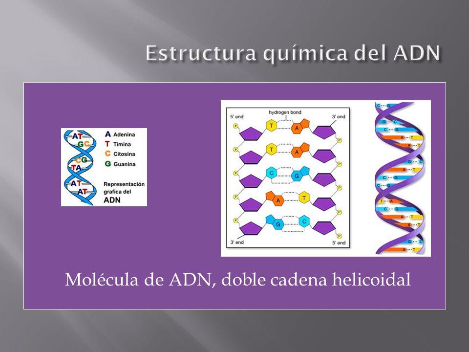 Estructura química del ADN