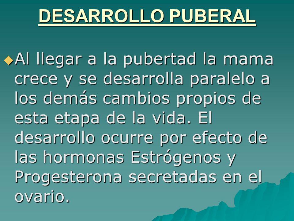 DESARROLLO PUBERAL