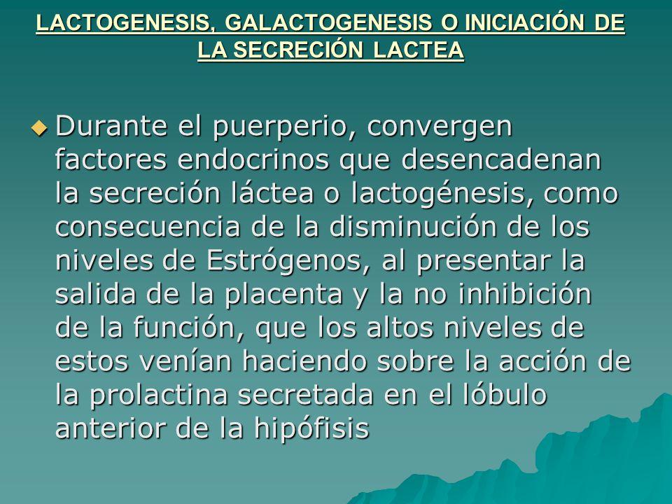 LACTOGENESIS, GALACTOGENESIS O INICIACIÓN DE LA SECRECIÓN LACTEA