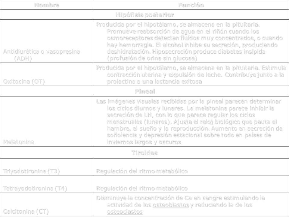Nombre Función. Hipófisis posterior. Antidiurética o vasopresina (ADH)